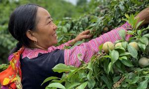 Shopee triển khai chương trình hỗ trợ xúc tiến tiêu thụ sản  phẩm nông sản các địa phương trên sàn TMĐT